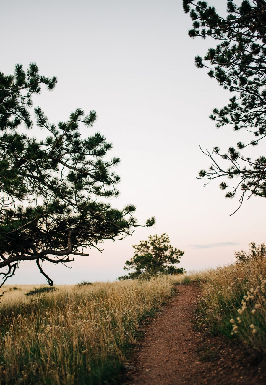 ponderosa pine and dirt trail at curt gowdy state park