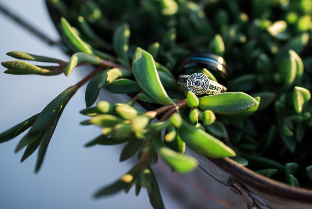 ring on succulent